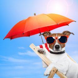 тепловой удар у собаки