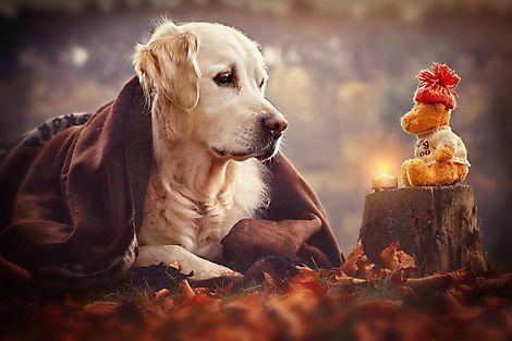 одиночество собаки