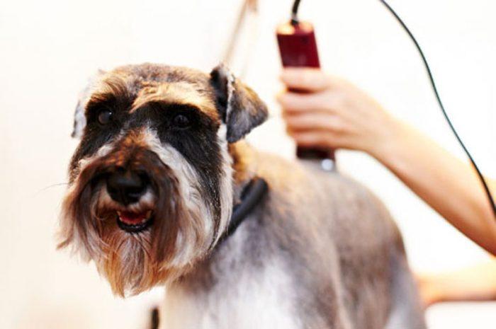 стрижка собаки машинкой