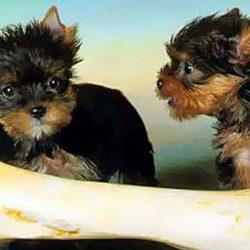 кормление собаки костями