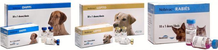 прививки собакам