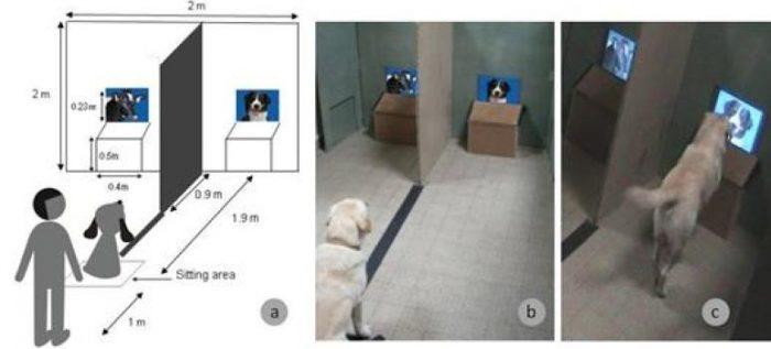 Что видят собаки, когда смотрят телевизор?