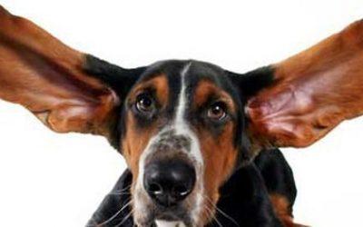 как почистить уши собаке