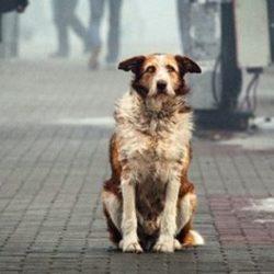 что делать с бездомной собакой