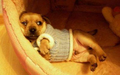 приучаем собаку к пеленке