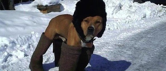 Что делать при обморожении у собаки