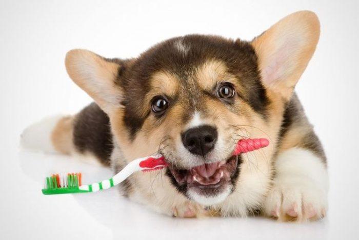 Почему у собаки пахнет изо рта?