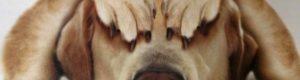 Что делать если ваш пес всего боится?